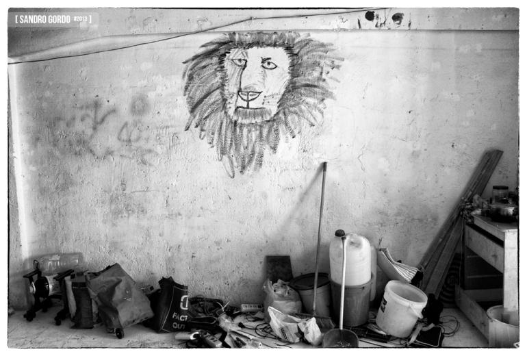 The Lion - Sandro Gordo 2013