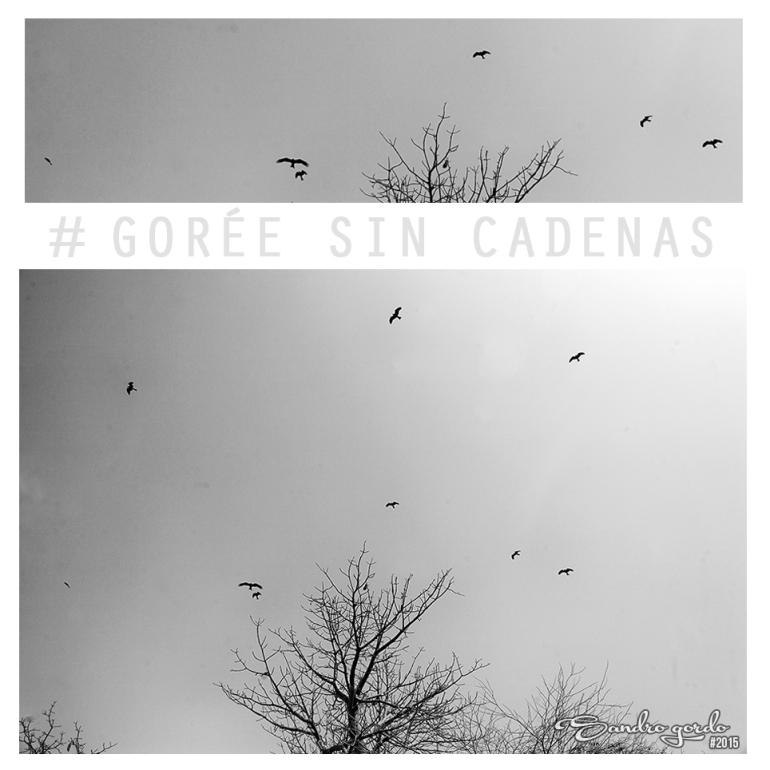BN_Goreé Sin Cadenas #3_La isla de Goree_Pájaros